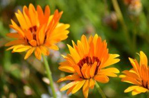 flower-1192683_960_720