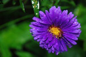 flower-22674_960_720