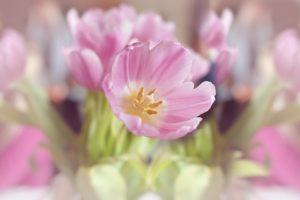 flowers-1338522_960_720