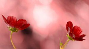 flower-953381_960_720